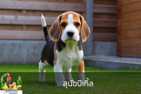สุนัขบีเกิ้ล จัดสวนหน้าบ้าน ต้นไม้มงคล สัตว์เลี้ยงน่ารัก ทริคจัดสวน วิธีเลี้ยง หมา แมว หมู นก