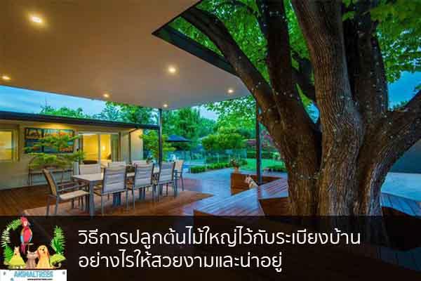 วิธีการปลูกต้นไม้ใหญ่ไว้กับระเบียงบ้าน อย่างไรให้สวยงามและน่าอยู่ จัดสวนหน้าบ้าน ต้นไม้มงคล สัตว์เลี้ยงน่ารัก ทริคจัดสวน วิธีเลี้ยง หมา แมว หมู นก