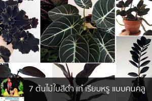 7 ต้นไม้ใบสีดำ เก๋ เรียบหรู แบบคนคลู จัดสวนหน้าบ้าน ต้นไม้มงคล สัตว์เลี้ยงน่ารัก ทริคจัดสวน วิธีเลี้ยง หมา แมว หมู นกประหยัดงบ