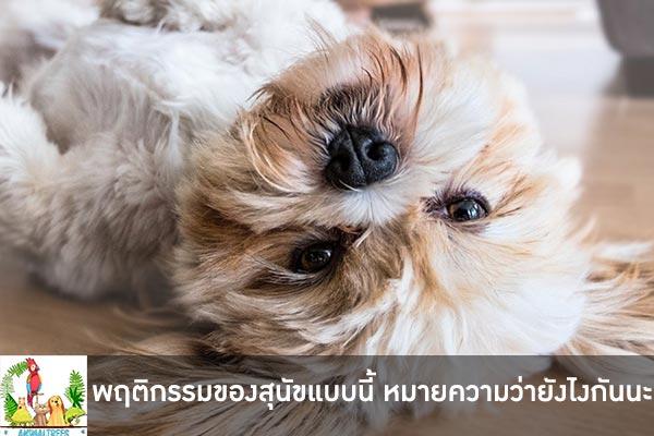 พฤติกรรมของสุนัขแบบนี้ หมายความว่ายังไงกันนะ สุนัขต้องการส่งสัญญาบอกอะไรเรา