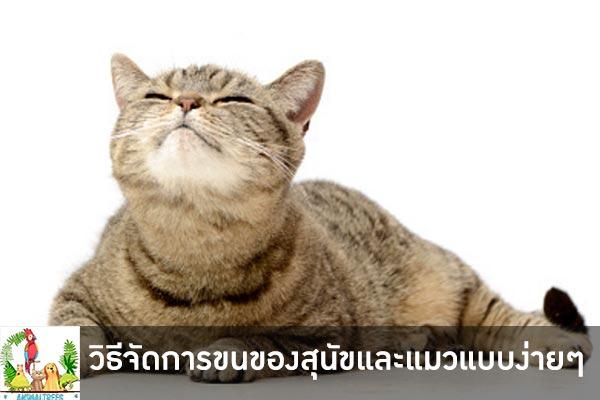 วิธีจัดการขนของสุนัขและแมวแบบง่ายๆ เชื่อเลยว่าสำหรับใครที่มีสัตว์เลี้ยงอยู่ที่บ้านนั้นคงจะปวดหัวไม่น้อย