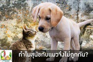 ทำไมสุนัขกับแมวจึงไม่ถูกกัน หลายคนคงทราบกันดีอยู่แล้ว