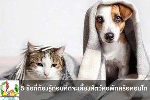 5 ข้อที่ต้องรู้ก่อนคิดจะเลี้ยงสัตว์ในหอพักหรือคอนโด นั้นมีอะไรบ้างสำหรับคนรักสัตว์